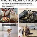 Традиционная пятничная подборка мемов на злобу дня из соцсетей
